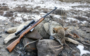Hunting violations, Killing a protected species